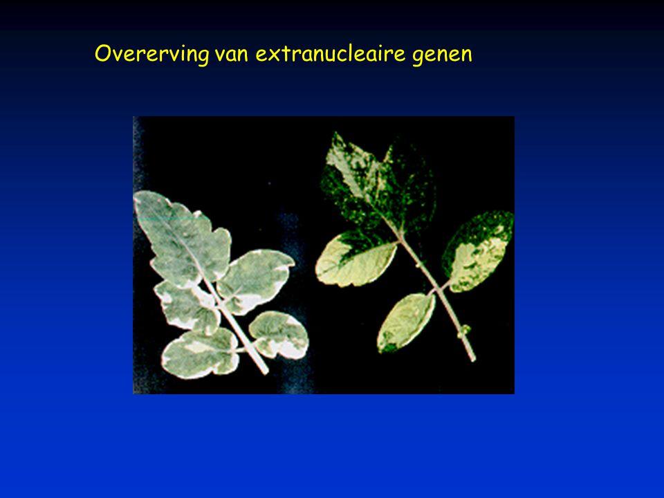 Overerving van extranucleaire genen