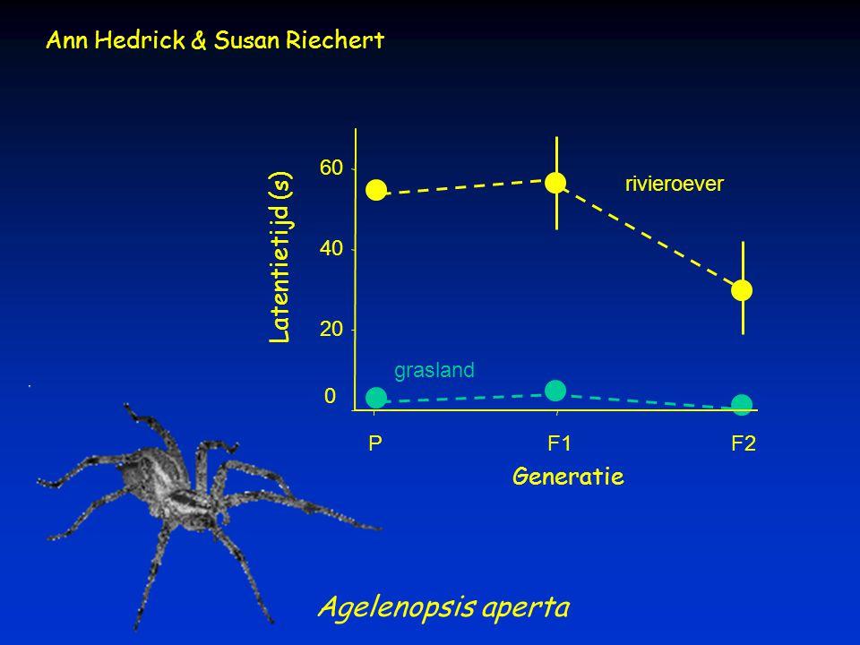Agelenopsis aperta rivieroever grasland Generatie PF1F2 Latentietijd (s) 0 20 40 60 Ann Hedrick & Susan Riechert