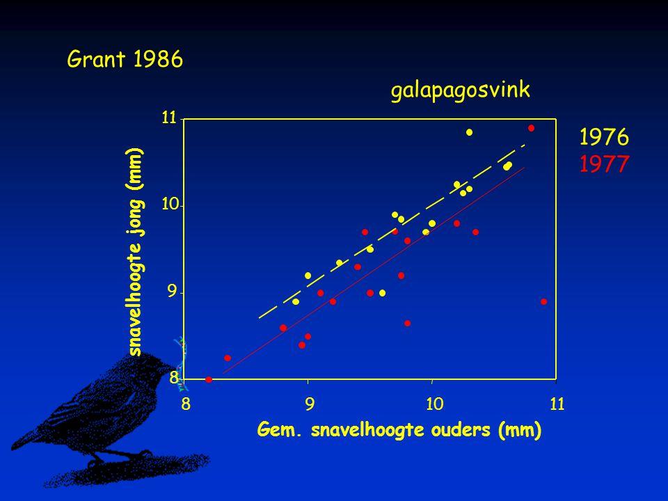 Gem. snavelhoogte ouders (mm) 891011 snavelhoogte jong (mm) 8 9 10 11 galapagosvink Grant 1986 1976 1977