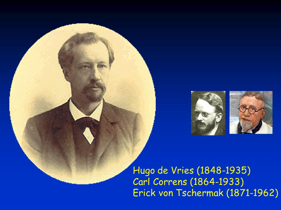 Hugo de Vries (1848-1935) Carl Correns (1864-1933) Erick von Tschermak (1871-1962)