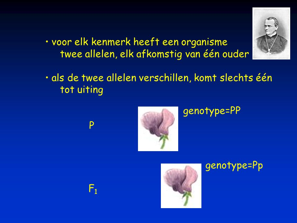 voor elk kenmerk heeft een organisme twee allelen, elk afkomstig van één ouder als de twee allelen verschillen, komt slechts één tot uiting P genotype