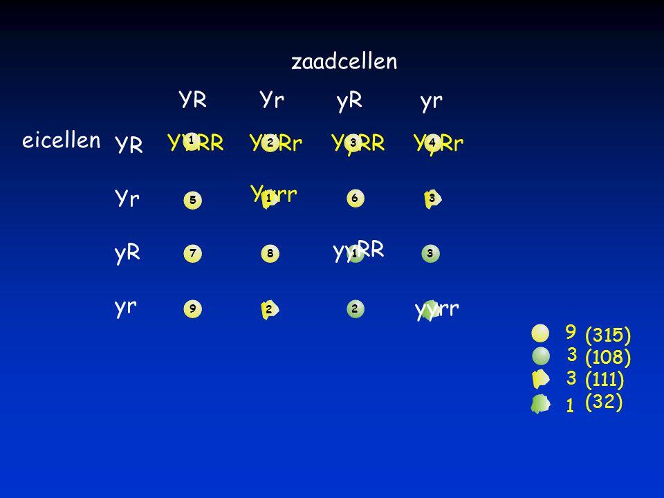 zaadcellen YR Yr yR yr eicellen YR Yr yR yr YYRR (315) (108) (111) (32) YYRrYyRRYyRr Yyrr yyRR yyrr 1 234 5 6 7 8 9 9 1 2 3 3 1 2 3 3 1