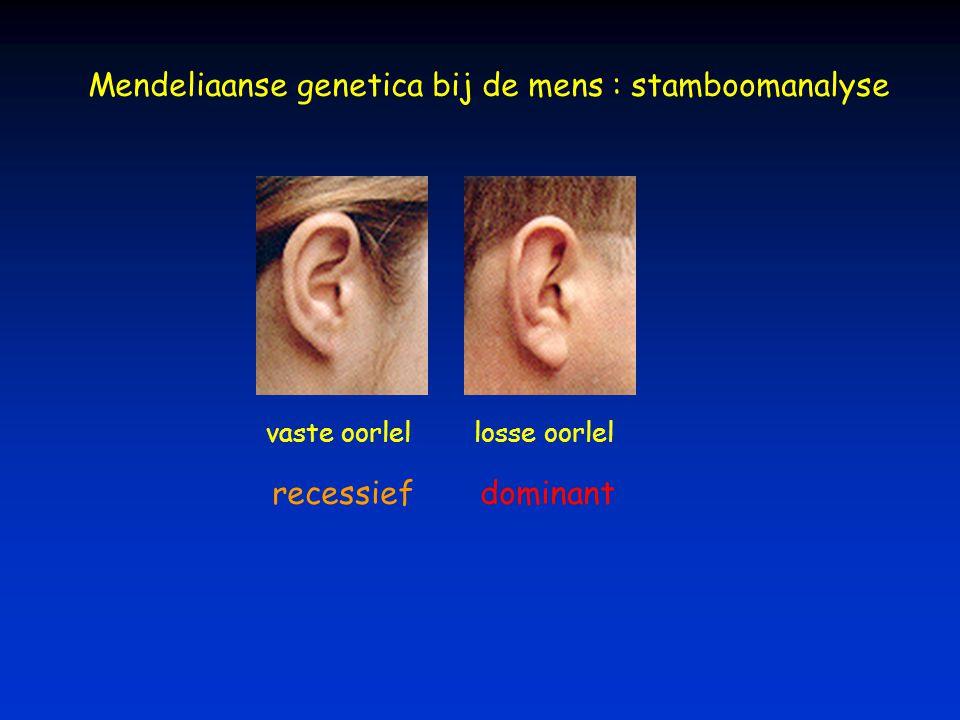 Mendeliaanse genetica bij de mens : stamboomanalyse losse oorlelvaste oorlel recessiefdominant