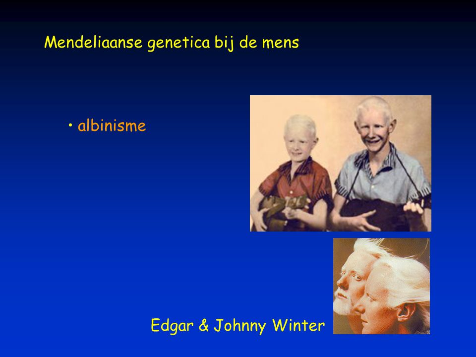 Mendeliaanse genetica bij de mens albinisme Edgar & Johnny Winter