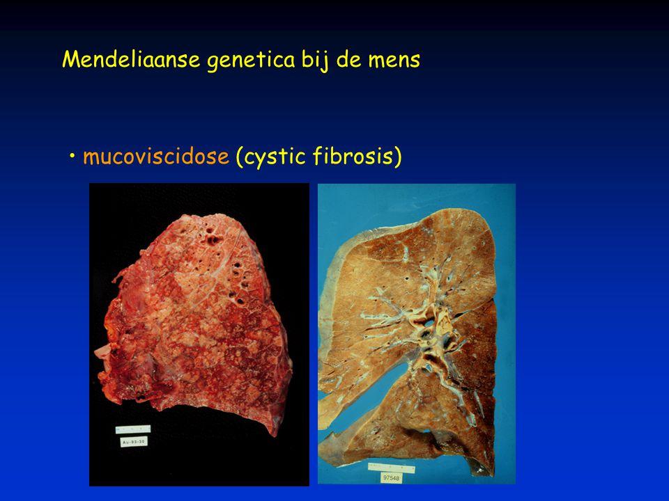 Mendeliaanse genetica bij de mens mucoviscidose (cystic fibrosis)