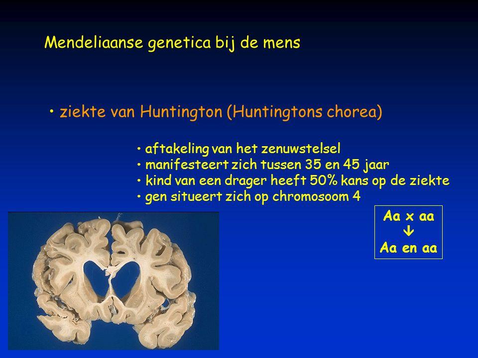 Mendeliaanse genetica bij de mens ziekte van Huntington (Huntingtons chorea) aftakeling van het zenuwstelsel manifesteert zich tussen 35 en 45 jaar ki
