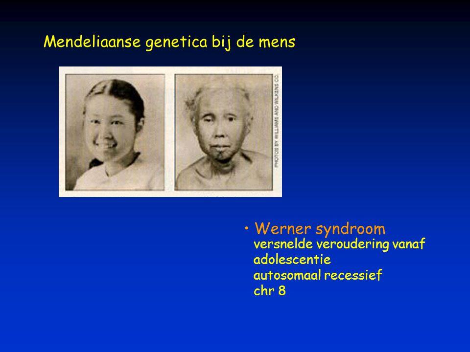 Mendeliaanse genetica bij de mens Werner syndroom versnelde veroudering vanaf adolescentie autosomaal recessief chr 8