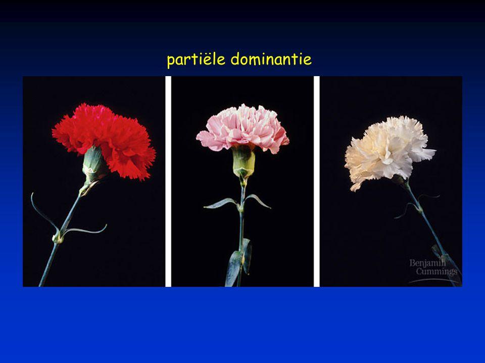 partiële dominantie