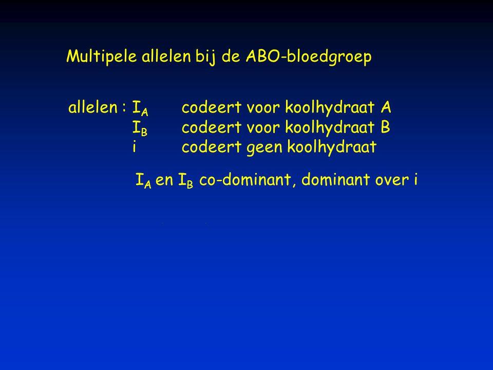 Multipele allelen bij de ABO-bloedgroep I A codeert voor koolhydraat A I B codeert voor koolhydraat B icodeert geen koolhydraat allelen : I A en I B c