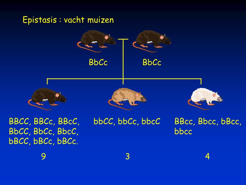 BbCc BBCC, BBCc, BBcC, BbCC, BbCc, BbcC, bBCC, bBCc, bBCc. bbCC, bbCc, bbcCBBcc, Bbcc, bBcc, bbcc 934 Epistasis : vacht muizen