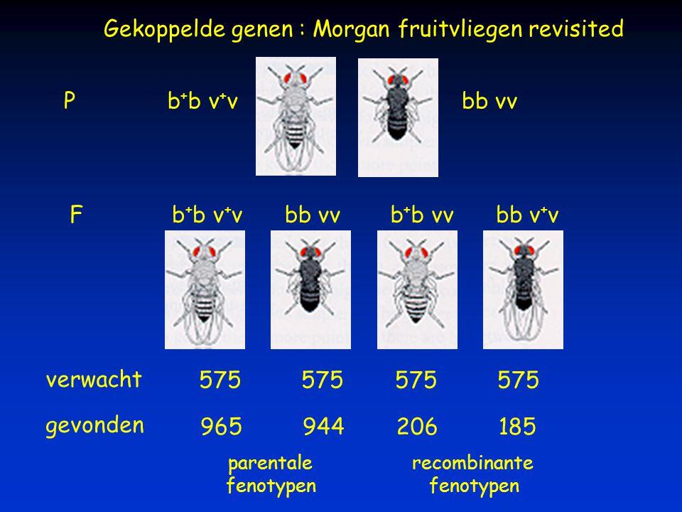Gekoppelde genen : Morgan fruitvliegen revisited b + b v + vbb vv P F b + b v + vbb vvb + b vvbb v + v verwacht 575 gevonden 965944 206185 parentale f