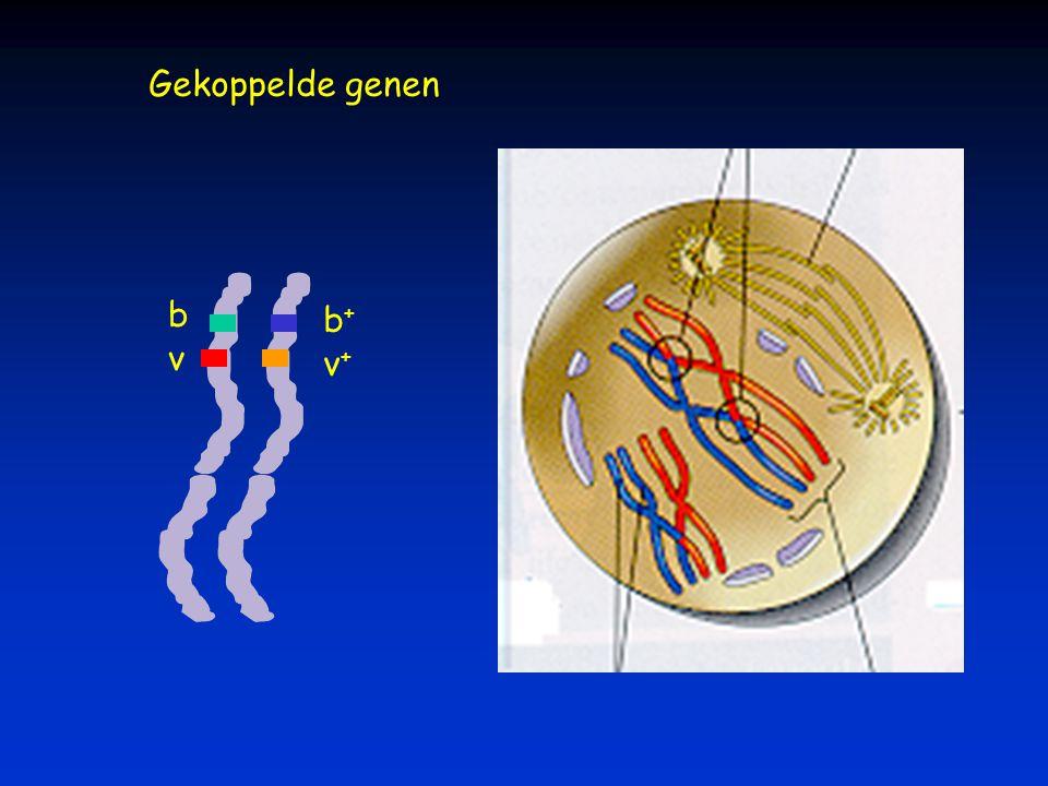 Gekoppelde genen b v v+v+ b+b+