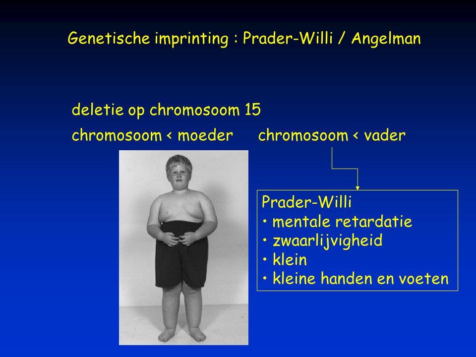 Genetische imprinting : Prader-Willi / Angelman deletie op chromosoom 15 chromosoom < vaderchromosoom < moeder Prader-Willi mentale retardatie zwaarli