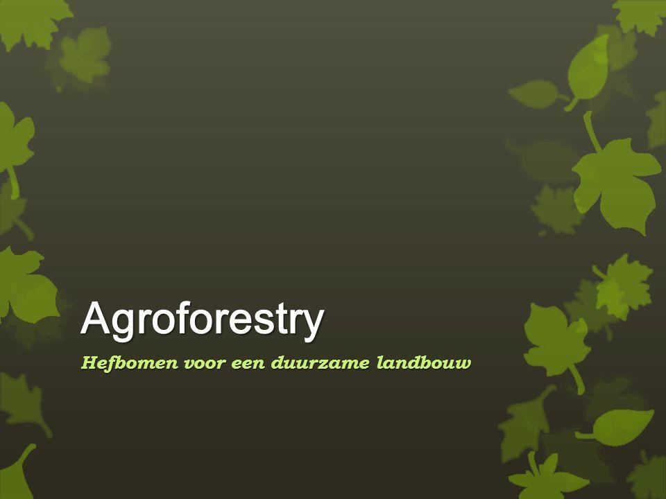 Agroforestry Hefbomen voor een duurzame landbouw