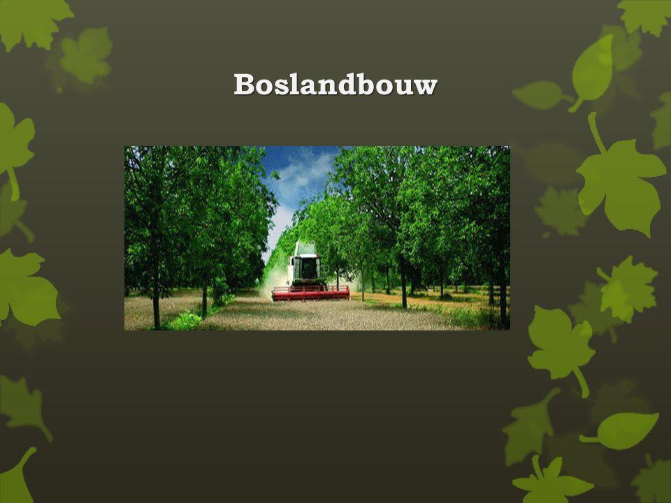 Boslandbouw