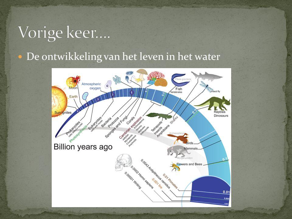 De ontwikkeling van het leven in het water