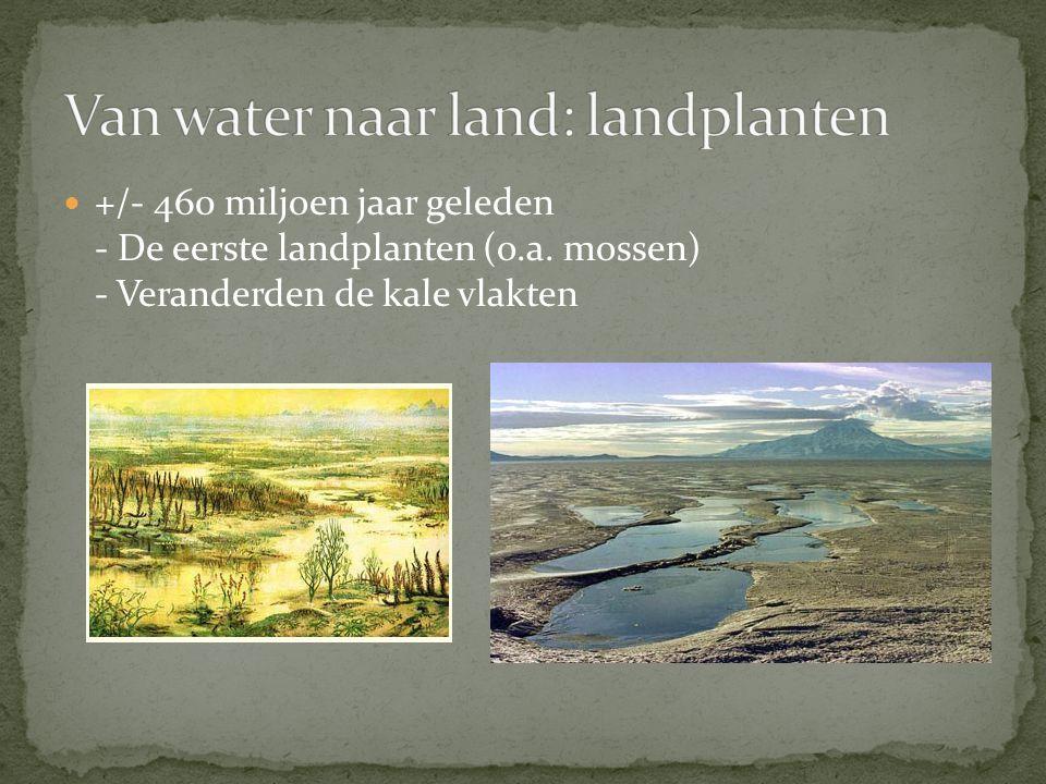 +/- 460 miljoen jaar geleden - De eerste landplanten (o.a. mossen) - Veranderden de kale vlakten