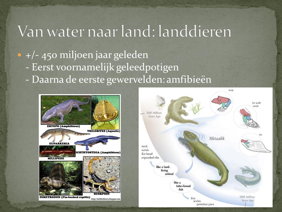 +/- 325 miljoen jaar geleden Eerste landreptielen Land bedekt met bossen Veel insecten