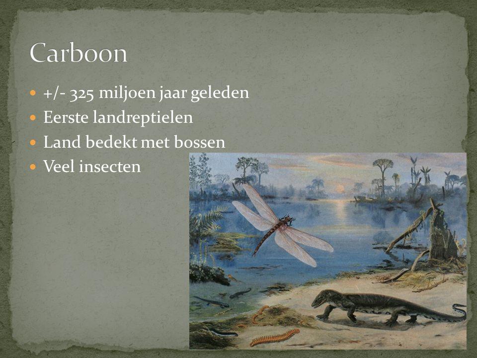 Vanaf +/- 250 miljoen jaar geleden Ontstaan vele soorten dinosauriërs Ontstaan eerste vogels en zoogdieren Vogels en zoogdieren leefden onopvallend naast sauriërs