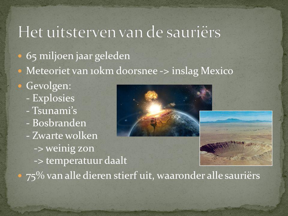 65 miljoen jaar geleden Meteoriet van 10km doorsnee -> inslag Mexico Gevolgen: - Explosies - Tsunami's - Bosbranden - Zwarte wolken -> weinig zon -> temperatuur daalt 75% van alle dieren stierf uit, waaronder alle sauriërs