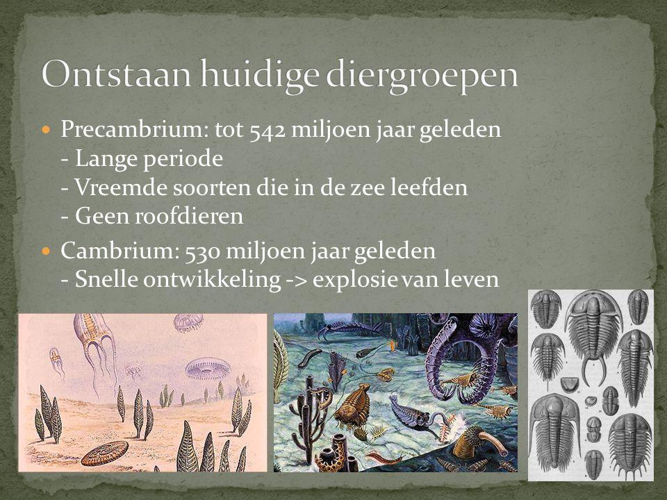 Precambrium: tot 542 miljoen jaar geleden - Lange periode - Vreemde soorten die in de zee leefden - Geen roofdieren Cambrium: 530 miljoen jaar geleden - Snelle ontwikkeling -> explosie van leven