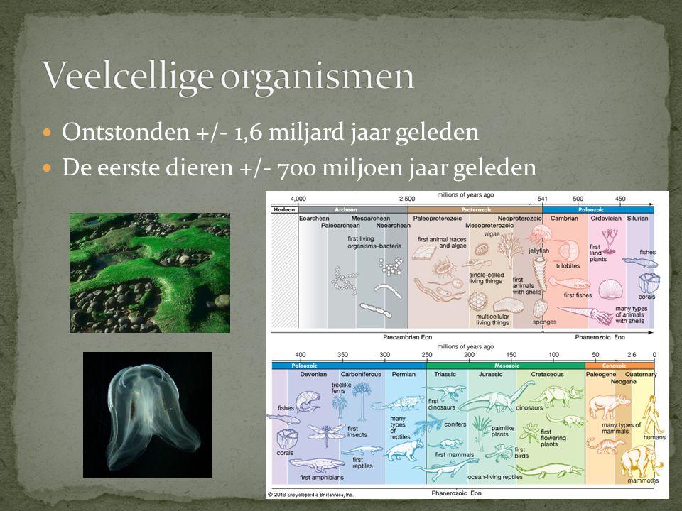 Ontstonden +/- 1,6 miljard jaar geleden De eerste dieren +/- 700 miljoen jaar geleden