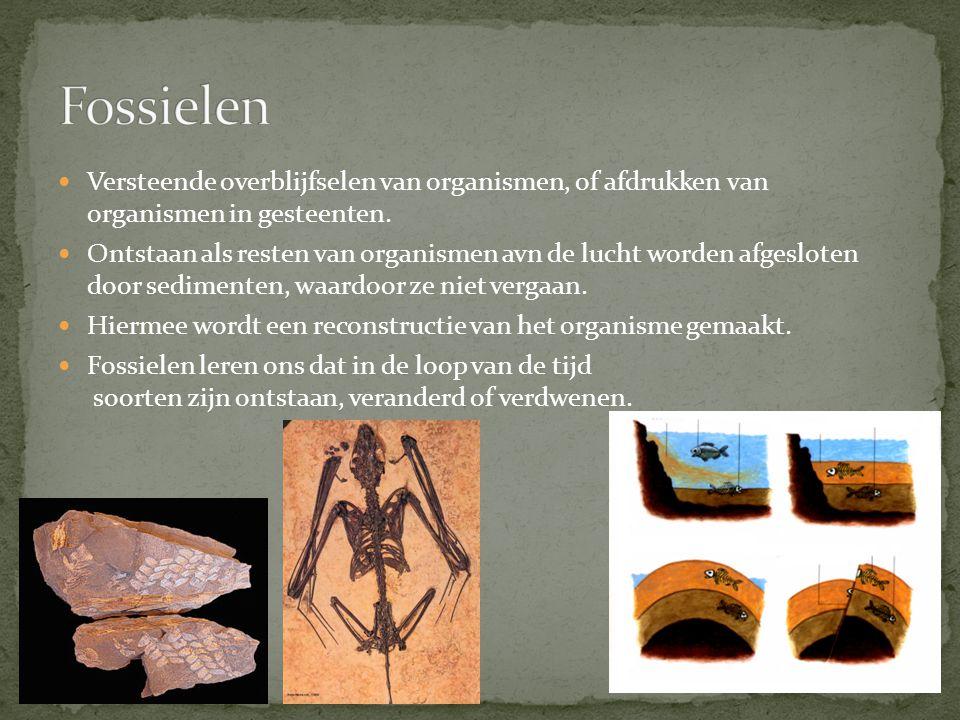 Door aanpassingen aan verschillende milieus hebben organen van de oorspronkelijke voorouders verschillende functies gekregen.