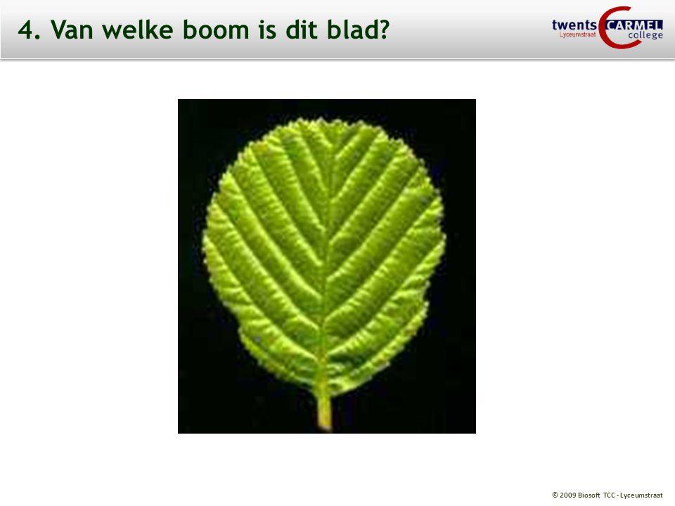© 2009 Biosoft TCC - Lyceumstraat 4. Van welke boom is dit blad?