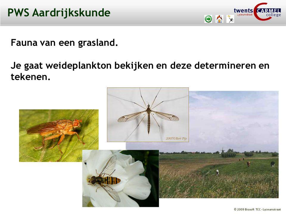 © 2009 Biosoft TCC - Lyceumstraat PWS Aardrijkskunde Fauna van een grasland.
