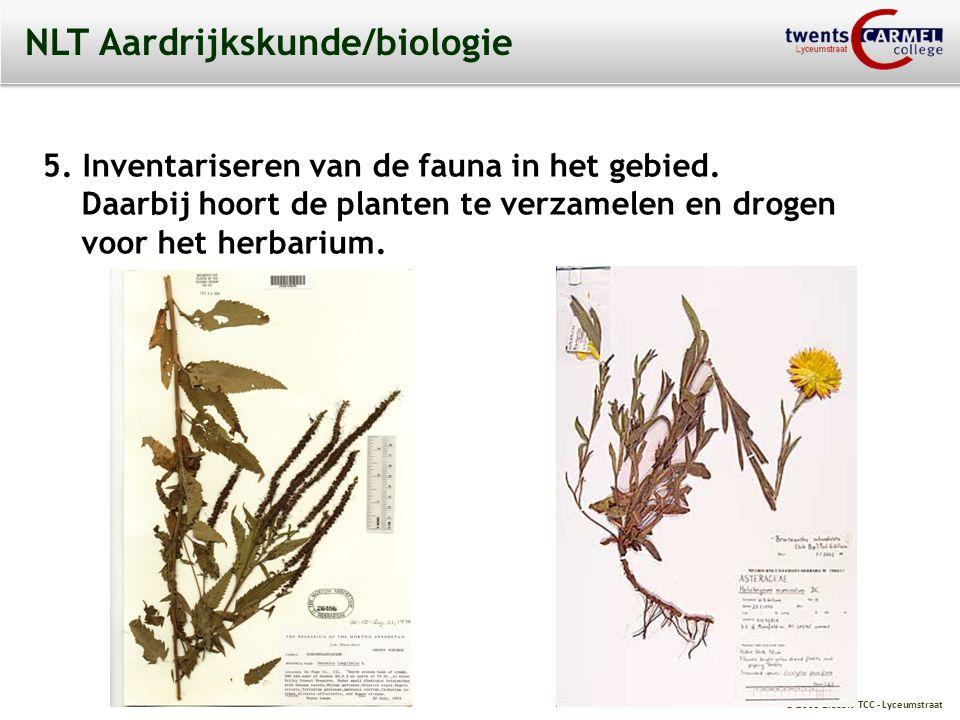 © 2009 Biosoft TCC - Lyceumstraat NLT Aardrijkskunde/biologie Een herbarium maken.
