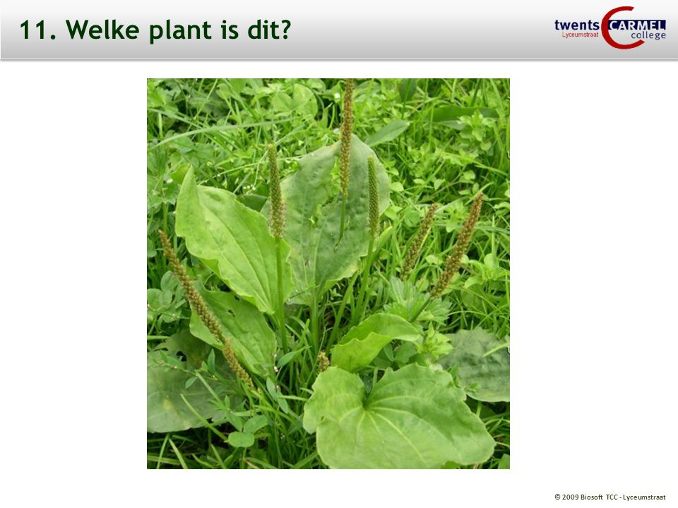 © 2009 Biosoft TCC - Lyceumstraat 11. Welke plant is dit?