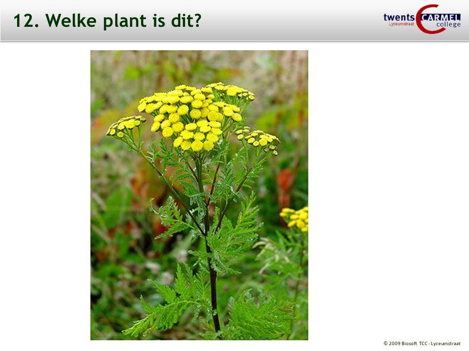 © 2009 Biosoft TCC - Lyceumstraat 12. Welke plant is dit?