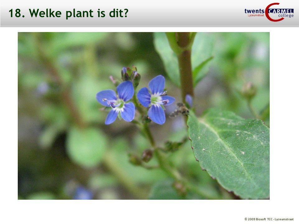 © 2009 Biosoft TCC - Lyceumstraat 18. Welke plant is dit?