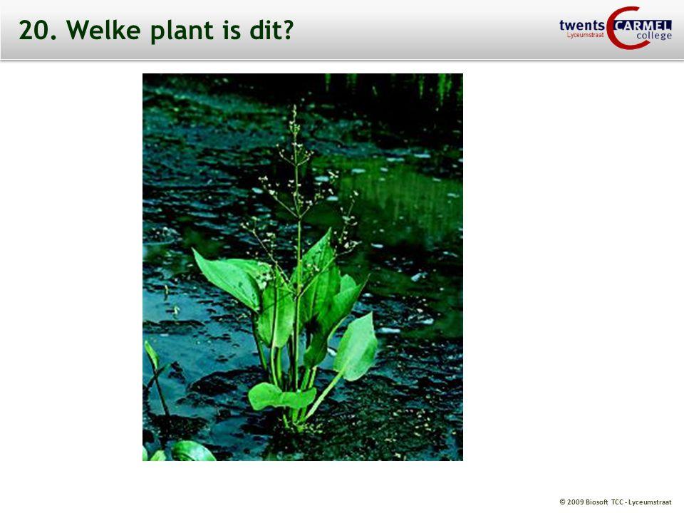© 2009 Biosoft TCC - Lyceumstraat 20. Welke plant is dit?