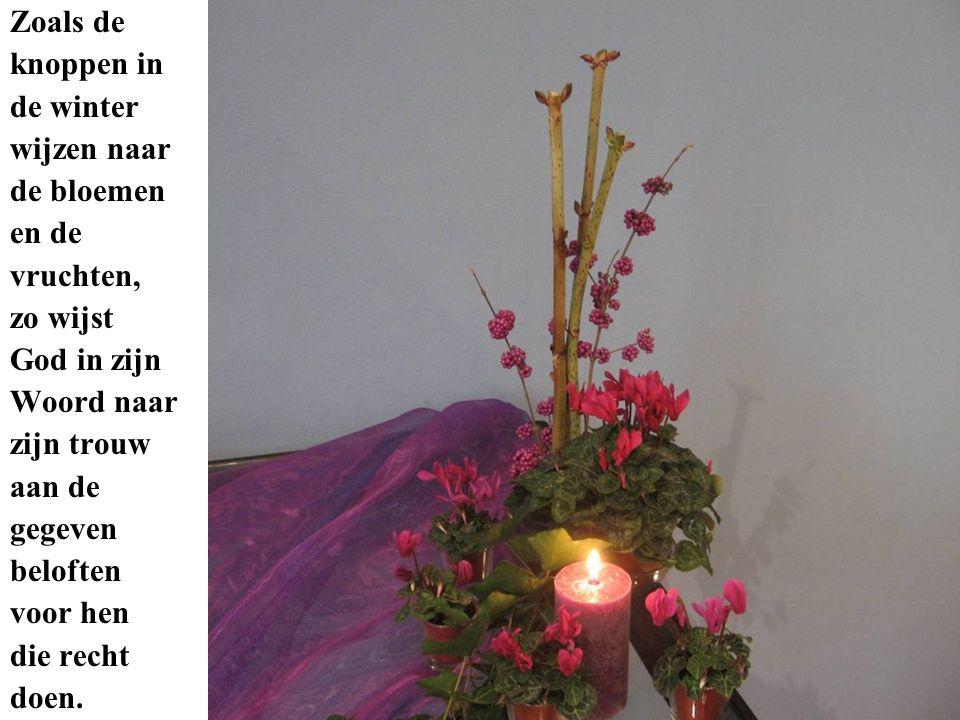 Zoals de knoppen in de winter wijzen naar de bloemen en de vruchten, zo wijst God in zijn Woord naar zijn trouw aan de gegeven beloften voor hen die recht doen.