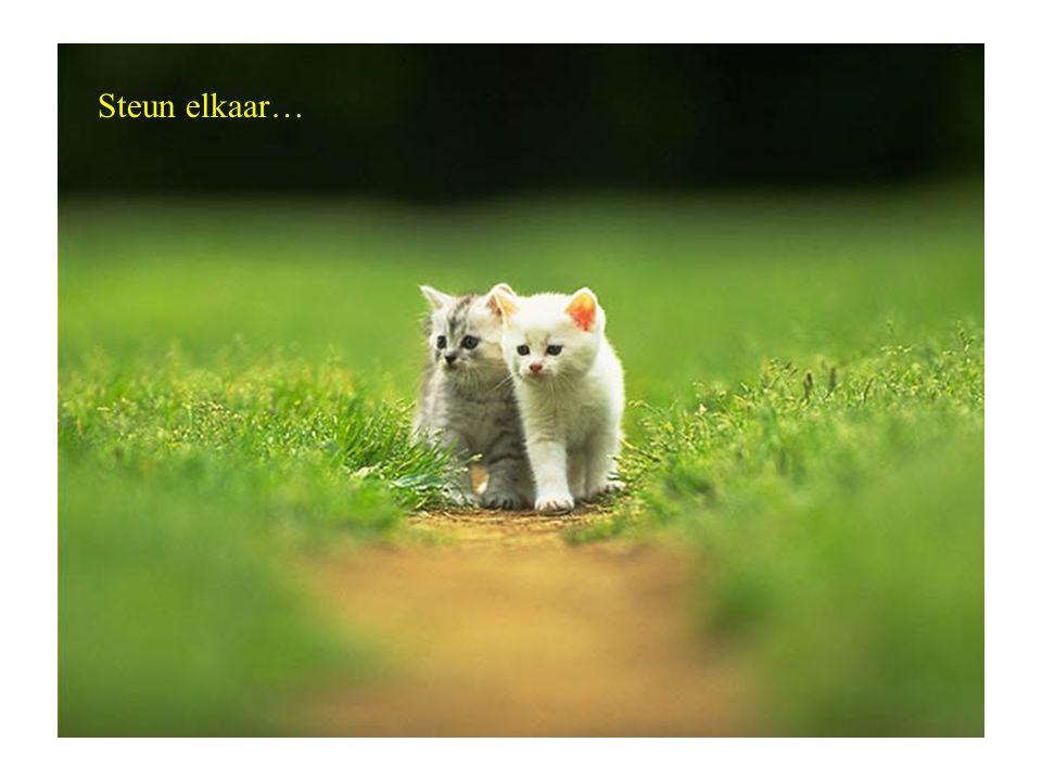 Steun elkaar…