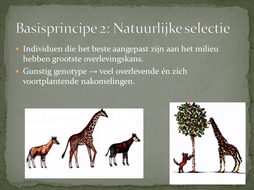 Er bestaan kleine verschillen tussen individuen van dezelfde soort.