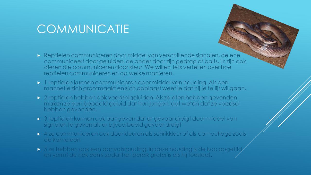 COMMUNICATIE  Reptielen communiceren door middel van verschillende signalen. de ene communiceert door geluiden, de ander door zijn gedrag of balts. E
