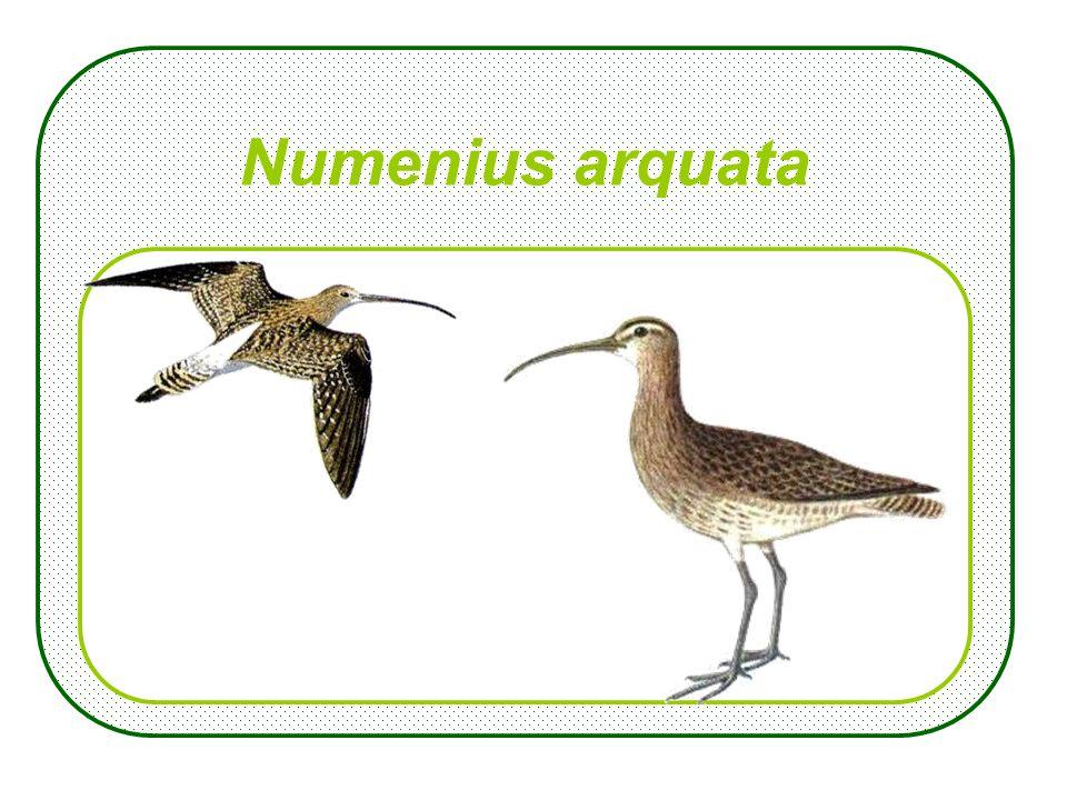 Diplopoda, vroeger: Chilognatha