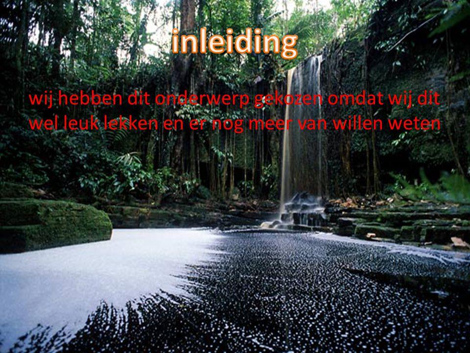 Het tropisch regenwoud is een heel bijzonder bos.