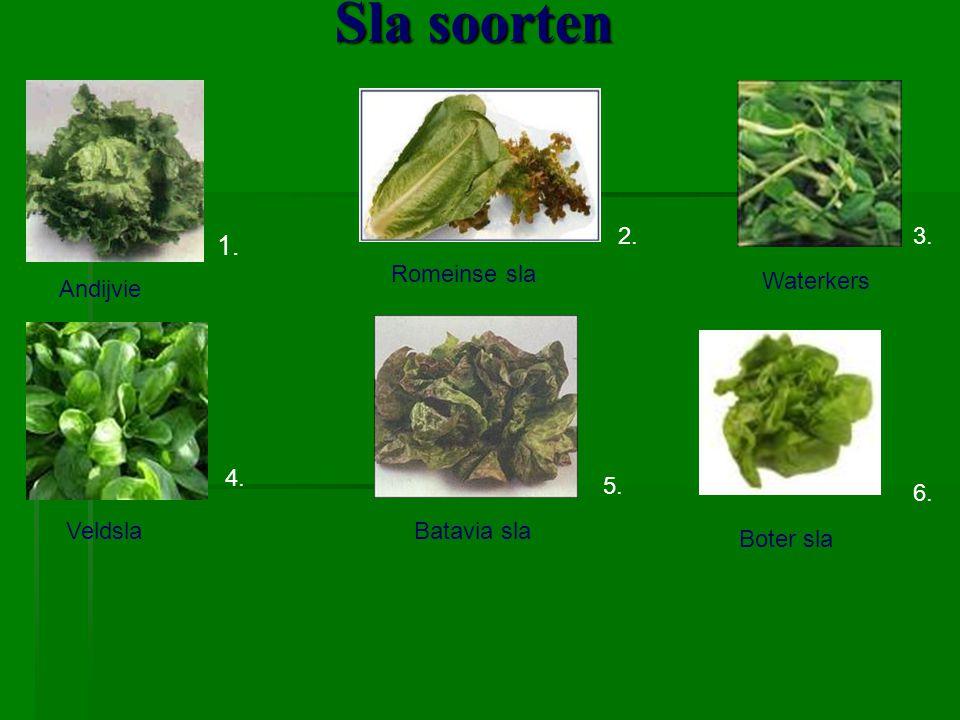 Sla soorten Andijvie Veldsla Romeinse sla Batavia sla Waterkers Boter sla 1. 2.3. 4. 5. 6.