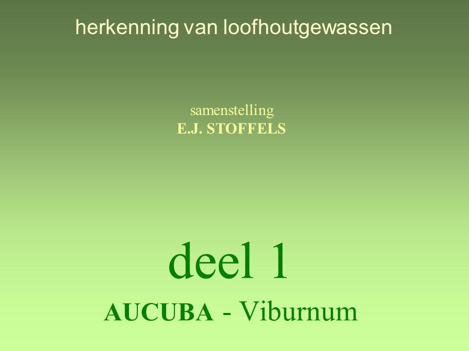 deel 1 AUCUBA - Viburnum samenstelling E.J. STOFFELS herkenning van loofhoutgewassen