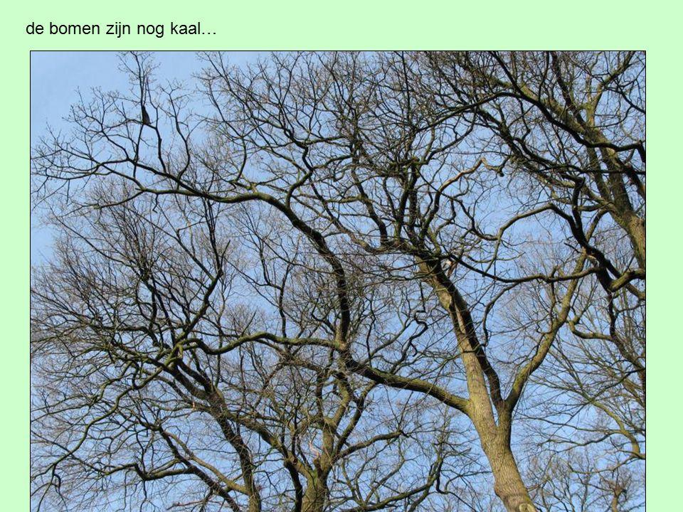 de bomen zijn nog kaal…