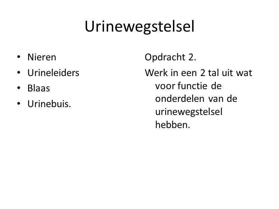 Urinewegstelsel Nieren Urineleiders Blaas Urinebuis. Opdracht 2. Werk in een 2 tal uit wat voor functie de onderdelen van de urinewegstelsel hebben.