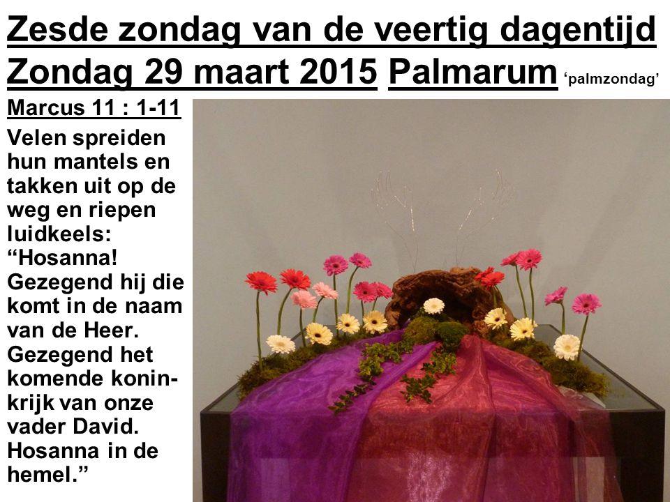 Zesde zondag van de veertig dagentijd Zondag 29 maart 2015 Palmarum ' palmzondag' Marcus 11 : 1-11 Velen spreiden hun mantels en takken uit op de weg en riepen luidkeels: Hosanna.