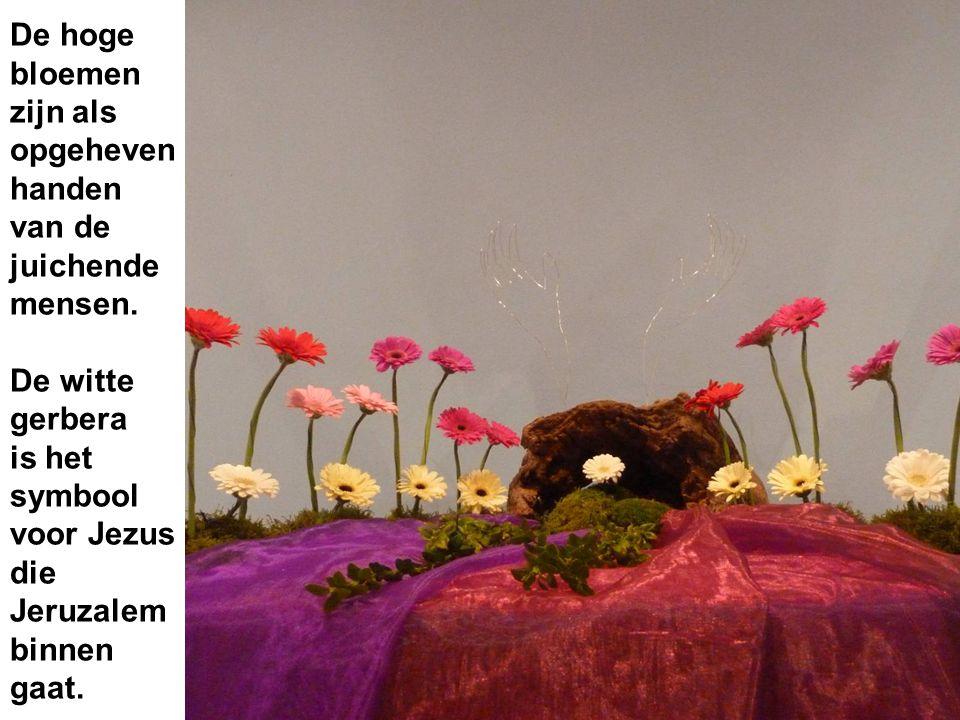 De hoge bloemen zijn als opgeheven handen van de juichende mensen. De witte gerbera is het symbool voor Jezus die Jeruzalem binnen gaat.