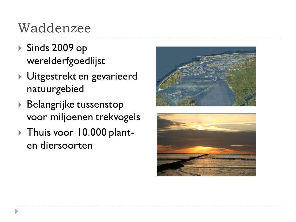 Waddenzee  Sinds 2009 op werelderfgoedlijst  Uitgestrekt en gevarieerd natuurgebied  Belangrijke tussenstop voor miljoenen trekvogels  Thuis voor 10.000 plant- en diersoorten