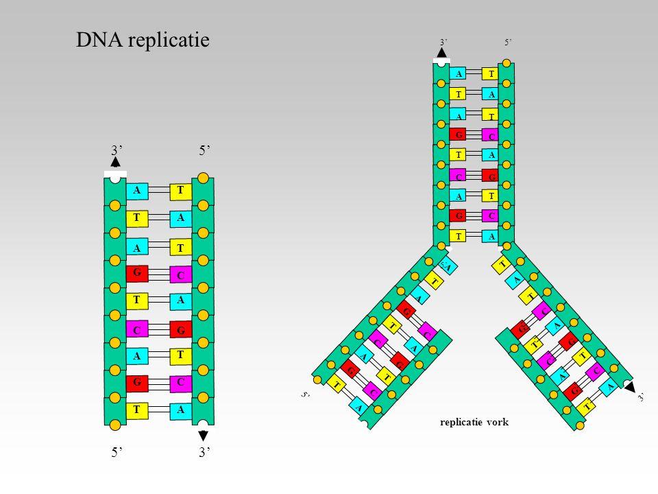 A A T G C C A T T G G C A A A T T T G G C 5' A A A A A A T T T T T T G G GC C C 3'5' A A A T T T G C C 3' replicatie vork DNA replicatie