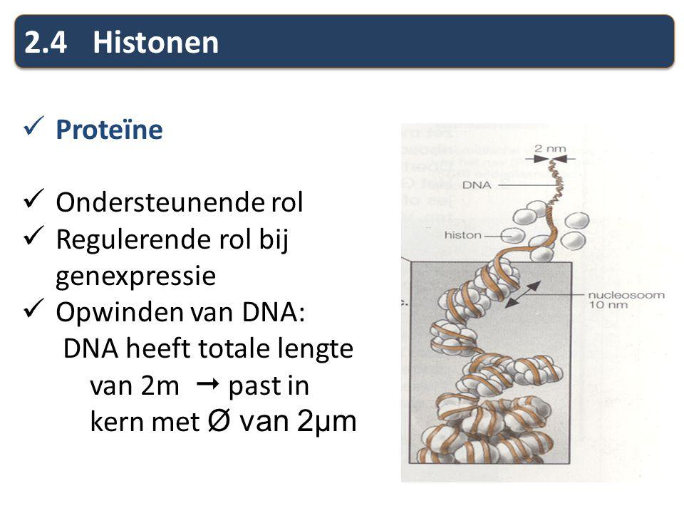 2.4Histonen Proteïne Ondersteunende rol Regulerende rol bij genexpressie Opwinden van DNA: DNA heeft totale lengte van 2m  past in kern met Ø van 2µm