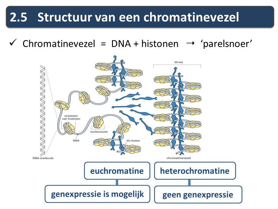2.5Structuur van een chromatinevezel Chromatinevezel = DNA + histonen  'parelsnoer' euchromatineheterochromatine genexpressie is mogelijk geen genexp